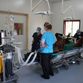 5 preparing a horse for surgery